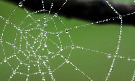 Fotografiar telas de araña